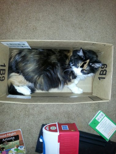 Callie in box